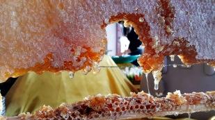 antalya acik bufe kahvalti denizimpark antalya kahvalti (16)