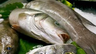 Antalya Balık Restoranı 0242 248 4142 antalya tavsiye edilen restoranlar antalya meşhur restoranlar (5)