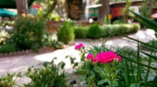 Antalya Köy Kahvaltısı - 0242 4394747 - Çakırlar Gzöleme Bazlama Paşa Kır Bahçesi Çakirlar (1)