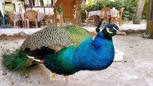 Antalya Köy Kahvaltısı - 0242 4394747 - Çakırlar Gzöleme Bazlama Paşa Kır Bahçesi Çakirlar (26)